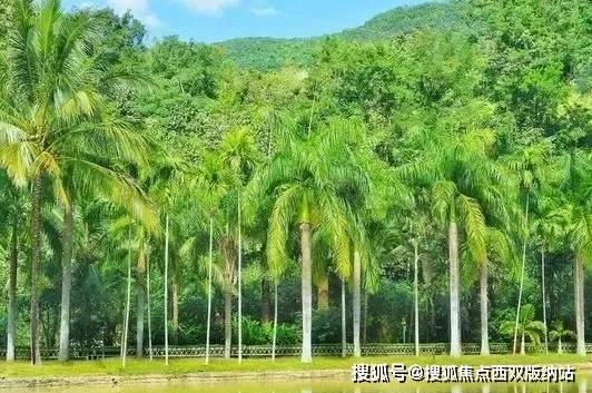 版纳滨江俊园——北纬21°上绚烂的绿洲,度假旅居的胜地