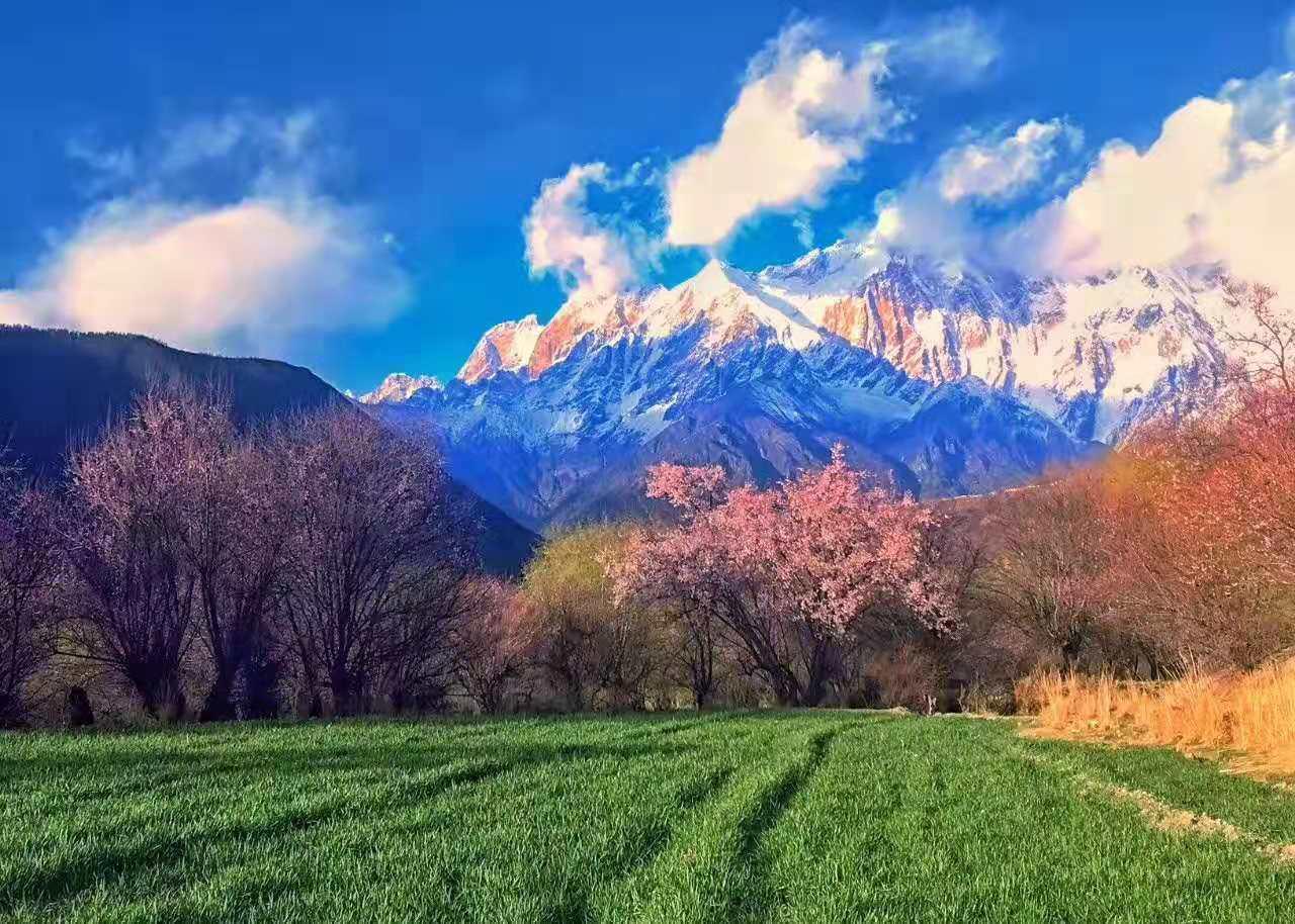 原创             国内最适合春天旅游的5个目的地,赏花进行时,你会选哪一个呢?