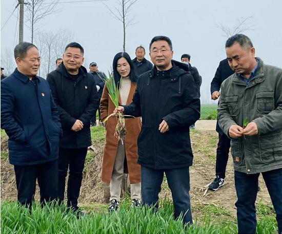 河南省农科院专家深入息县开展小麦春管技术指导