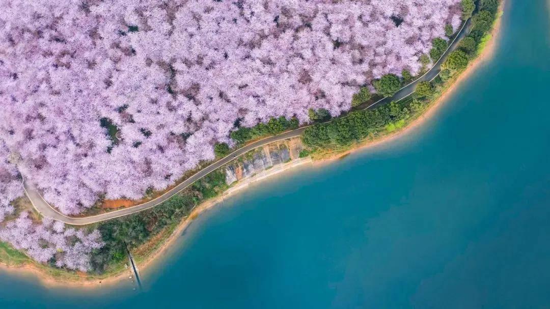原创             粉嫩如少女、灿烂如金、洁白如雪:哪片花海才是你心中最美春天?