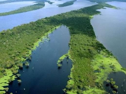 尼格罗河中的美丽精灵——南美短鲷!