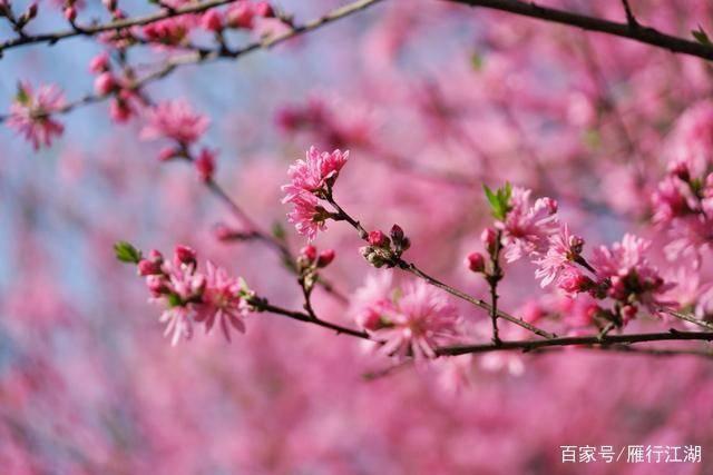 春天来杭州西湖人挤人?告诉你一个仙境般的西湖小众观景点