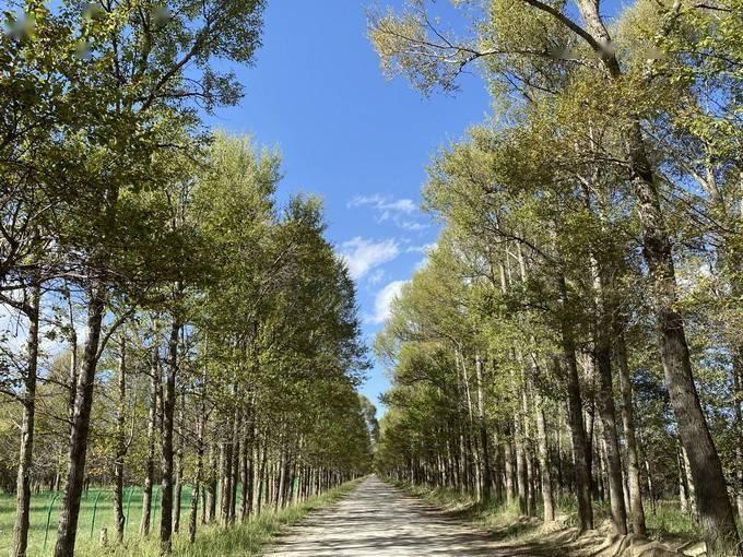 枣庄农民砍700棵树被判刑