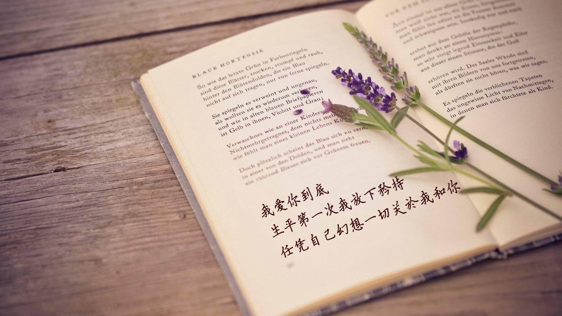两情相悦惜双双全文阅读 两情相悦的诗句