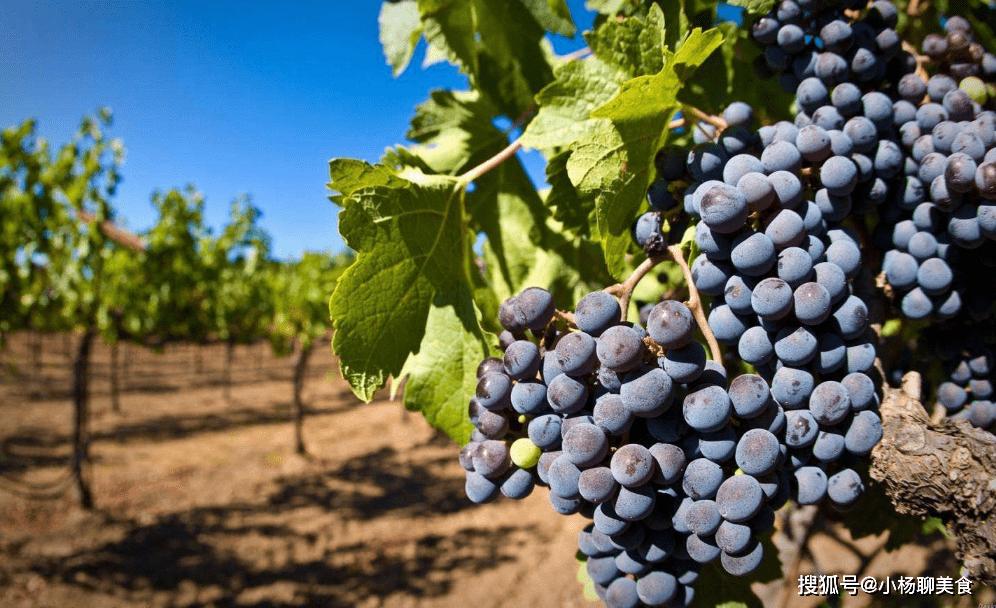 常吃葡萄好处多,但2类人尽量别碰,尤其第一种,尽量别吃了!