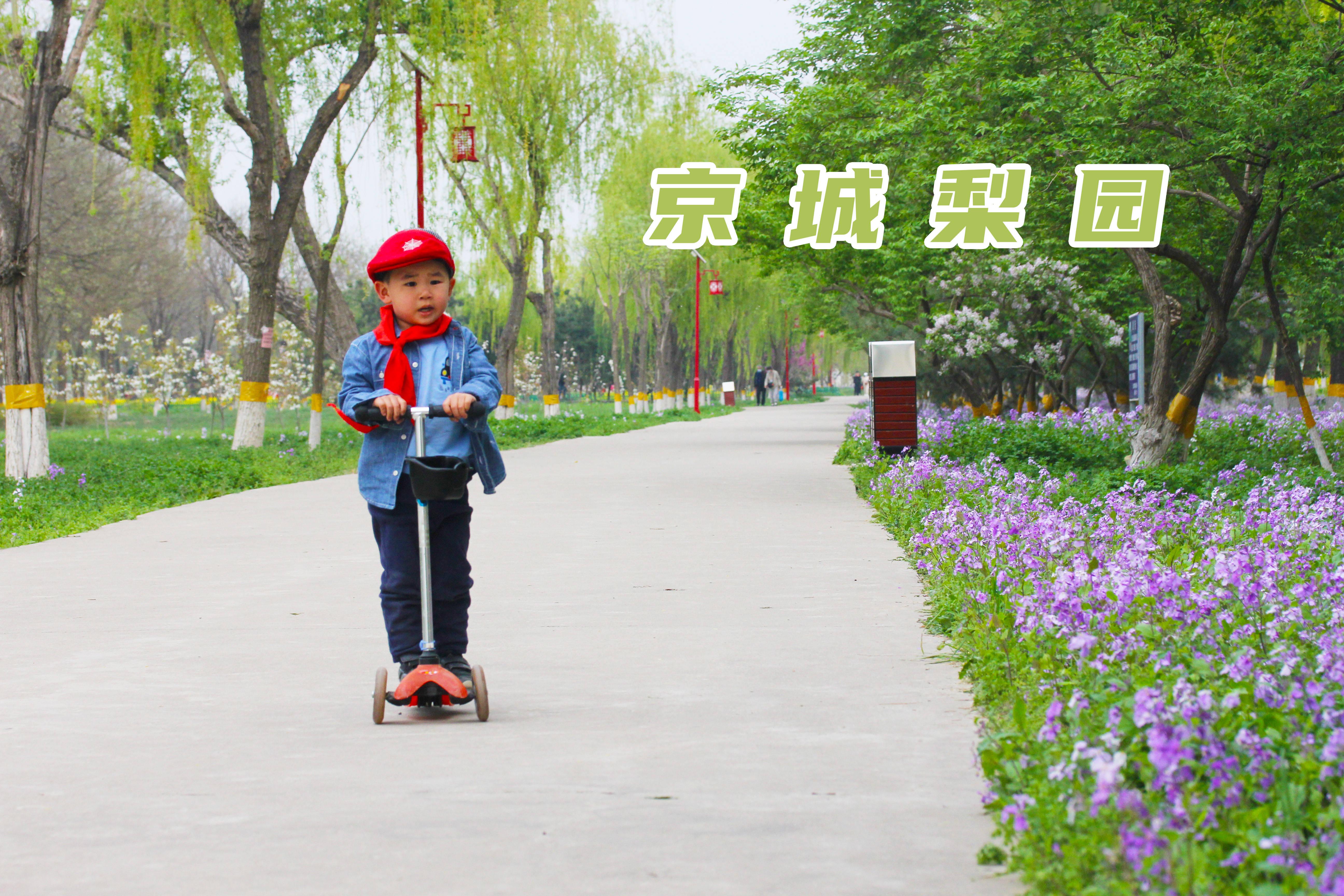 北京最美油菜花海,在这个百花盛开的免费公园,随手一拍就是大片