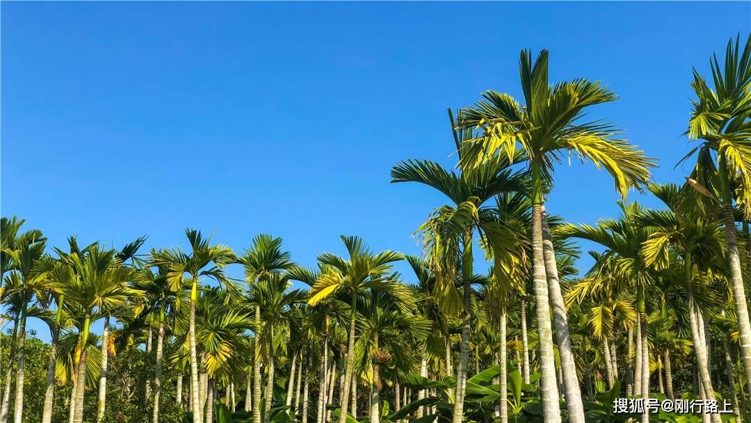 满园春色,有着丰富植被的红树林生态公园