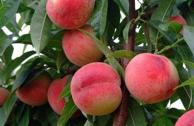 心理测试:你最喜欢摘哪个水果吃?测你本月会有什么好事发生?