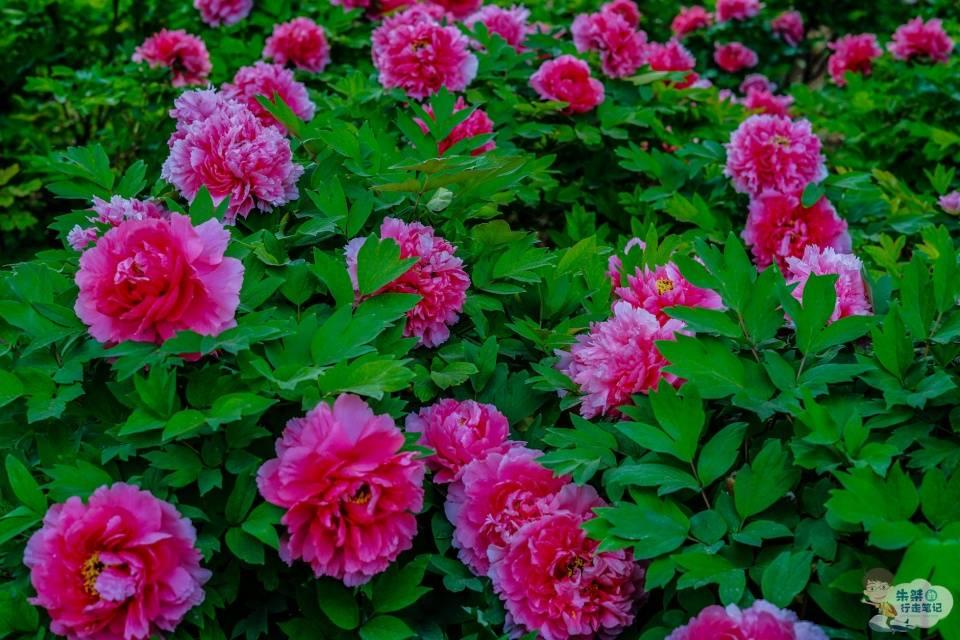 """又是一年花期,国内两朵花绽放,以赏花之名感受何为""""花开盛世"""""""