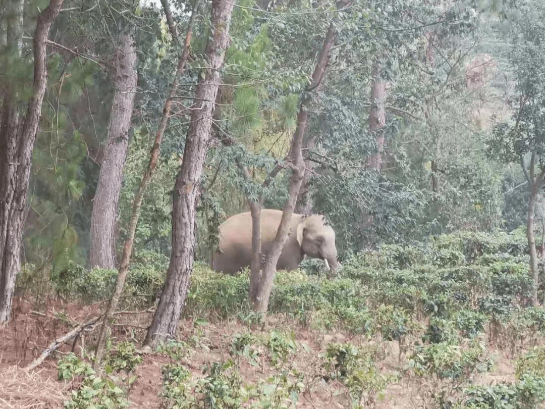 五一跟着野象打卡墨江北标园