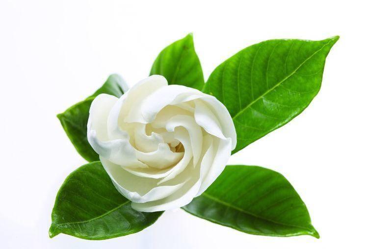 半个月内,桃花与缘分迎来高峰期,收获爱情,幸福一生的3大生肖  第2张