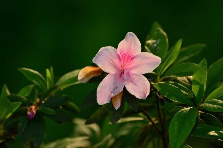 6月初,桃花开姻缘旺,喜鹊欢叫,甜蜜恋爱,幸福一生的四大生肖  第3张