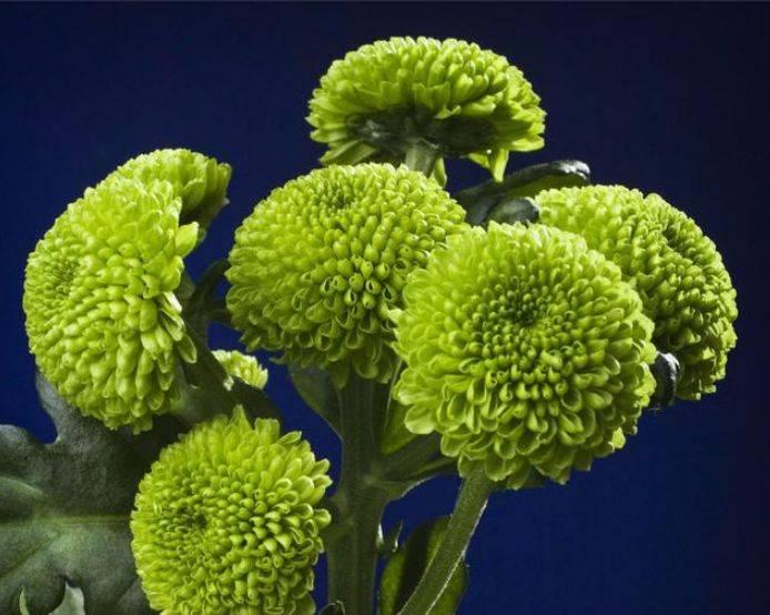 心理测试:你最喜欢哪束花,测你什么时候能结束单身?