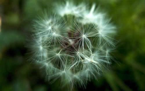 甜美可爱,心思细腻,理解人心,容易让人爱得深的四大星座女