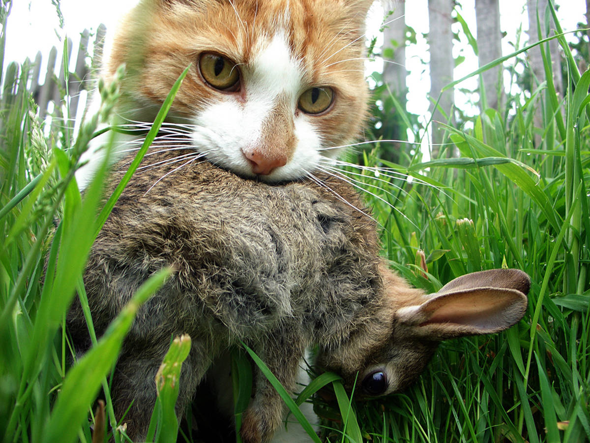 吃青草的一肖动物 爱吃青草打一生肖