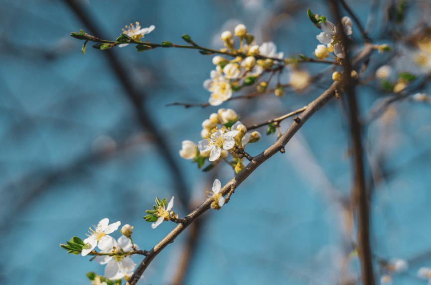 6月下旬,大喜登门,大胆追爱,满面桃花,3生肖爱情之路一帆风顺