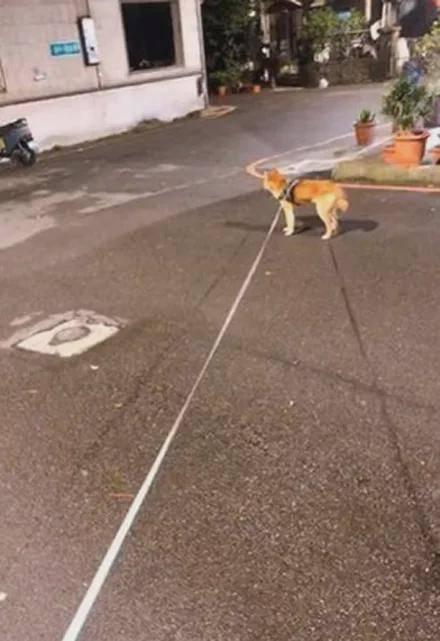 养两只性格完全不同的狗是什么体验?