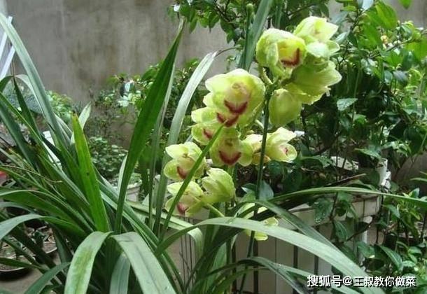 """兰花养护很轻松,主要有""""三通"""",做好了,兰花朵朵开"""