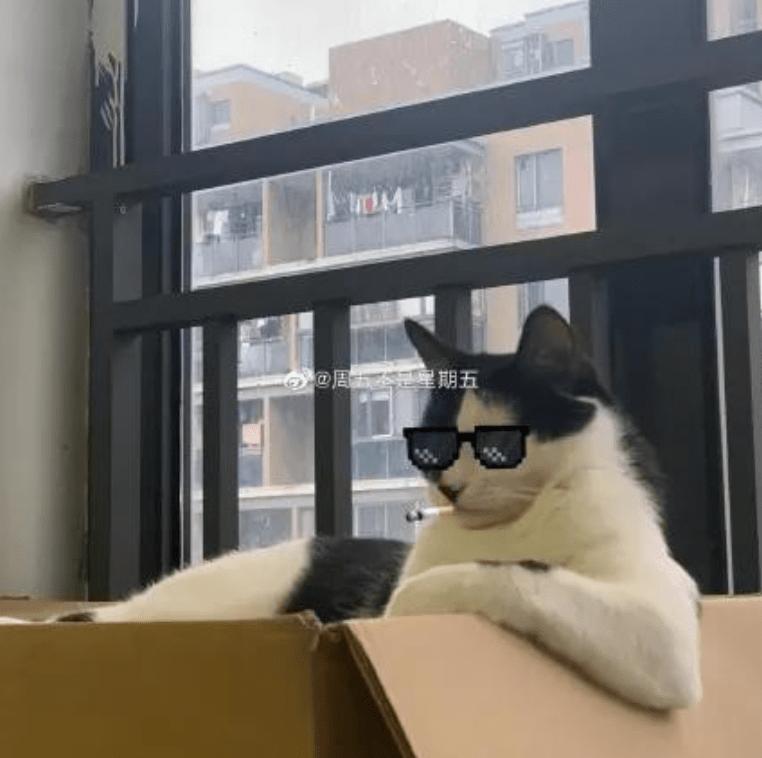 当小猫咪亮起大粗胳膊,我直呼大佬