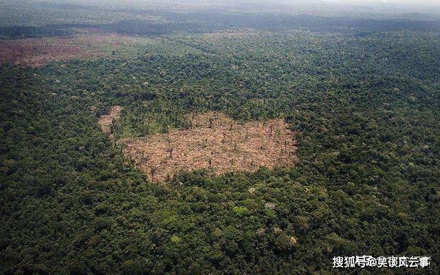 亚马逊森林为何如此重要?看完才知道它有多伟大