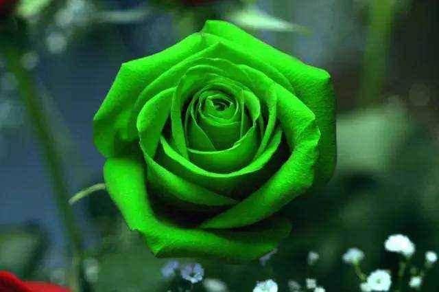 预计下周开始,桃花朵朵,邂逅旧爱,回心转意的四大星座
