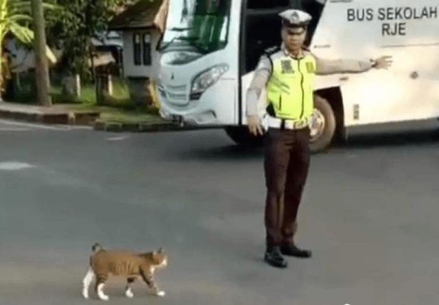 猫咪想要过马路,向交警求助,接下来忍住别笑,镜头记录全过程