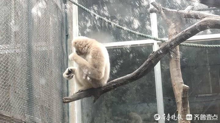 """盘点济南动物园""""老寿星""""!它们也过重阳节"""