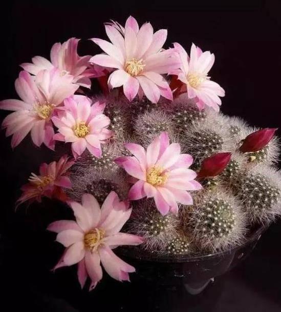 秋冬适合新手的4种花,花色艳丽又好养,少走弯路值得拥有