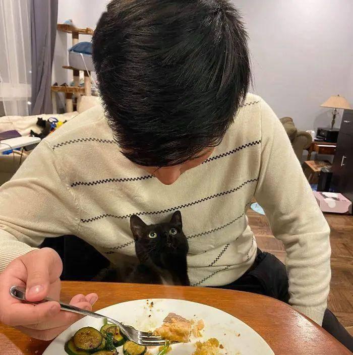 一只猫爱不爱你,看眼神就知道…