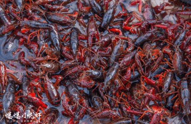 小龙虾市场潜力如何