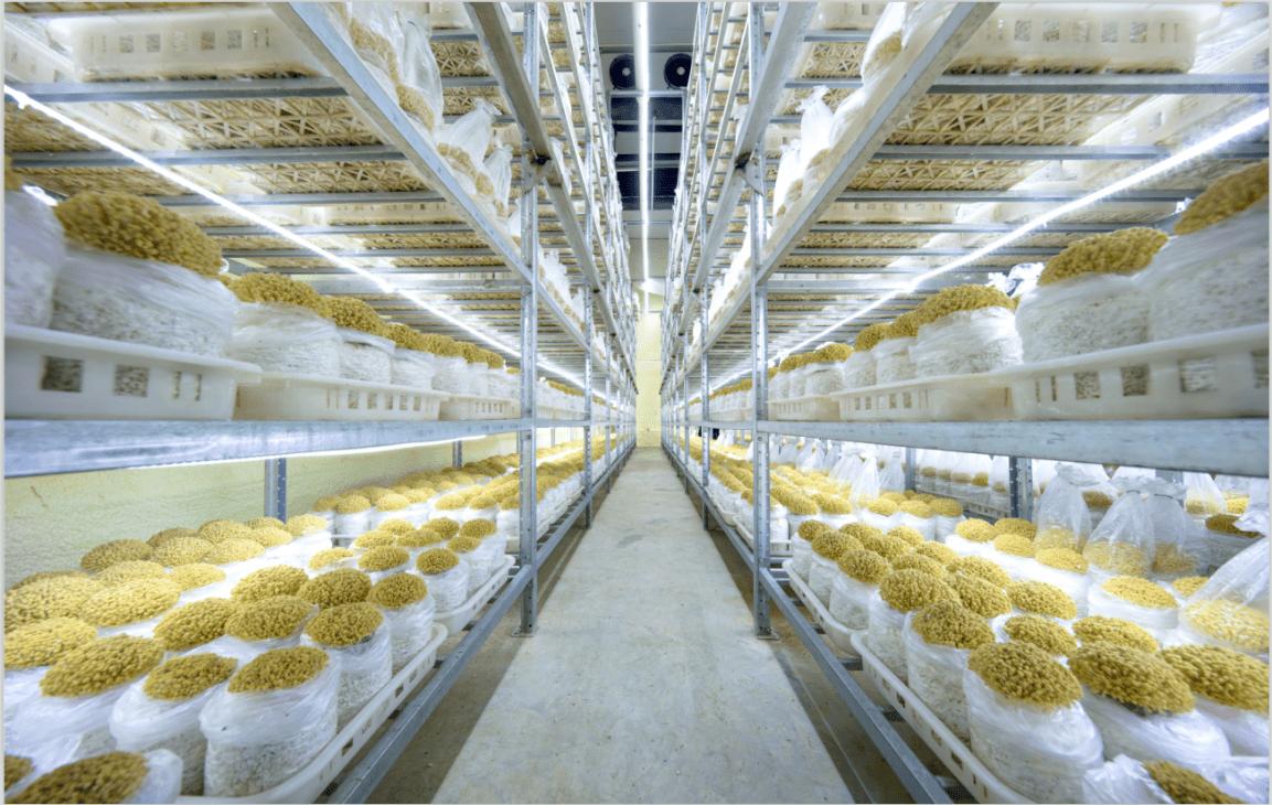 金大州猴頭菇在傳統健康食品與零食食品之間做出的抉擇
