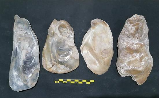 """8000年前的浙江人吃了""""海鲜大餐"""",还做了""""垃圾分类"""""""