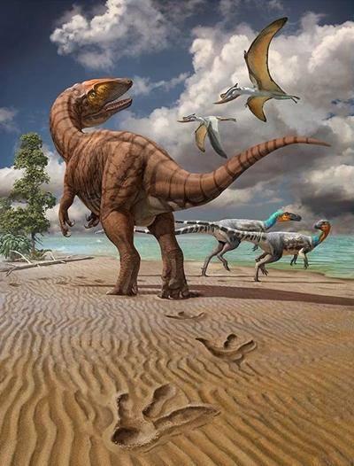 科研团队发现目前最大的亚洲恐龙足迹