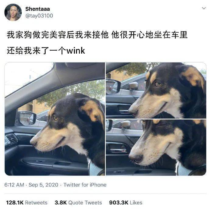 狗子发现铲屎官在拍照,就摆了个邪魅的微笑