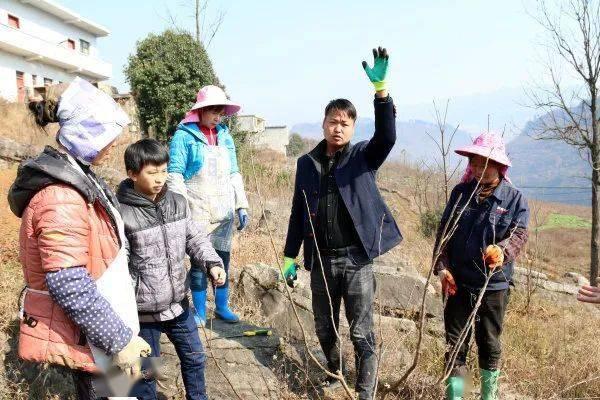 华体会app| 阳长镇:石旮旯里种果树 托起致富新希望