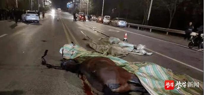 """惊魂!""""马自达""""轿车马路上撞飞两匹马!"""