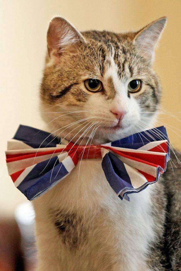 """上任十年、历经3位首相,英国""""御猫""""工作能力咋样?"""