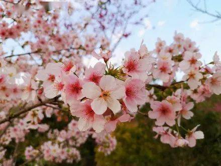 听见花开 大美福建!不负春光,一起来云赏花!