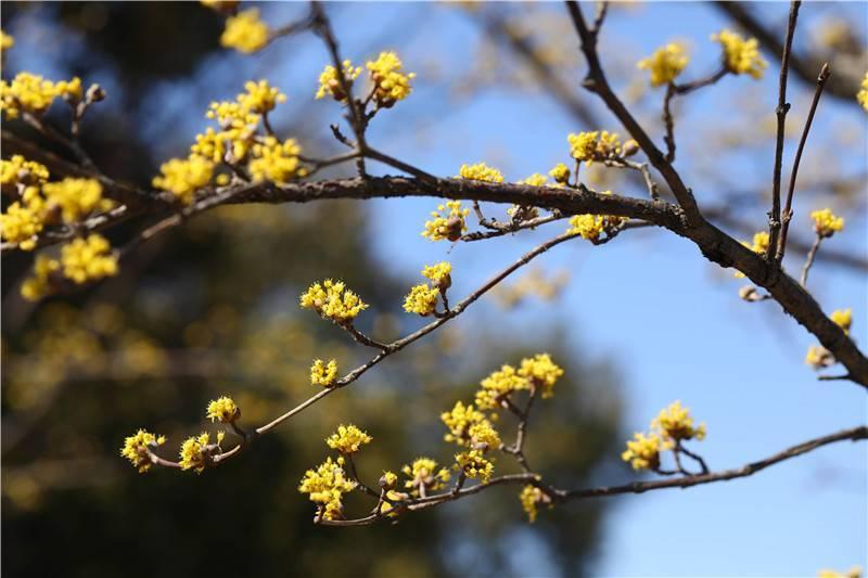 早春除了梅花樱花还有啥 这份赏花攻略了解一下