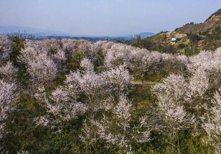 看看这些花花美景,周末赏花打卡又添好去处