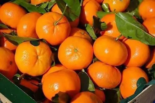 橘子皮放锅里蒸一蒸,大多数人不知道有啥用途,看完就明白了