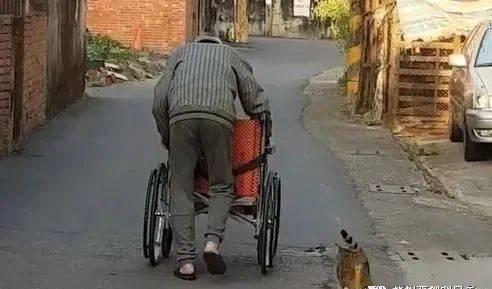 78岁阿公推轮椅给流浪猫送爱心餐,画面暖晕超多网友!
