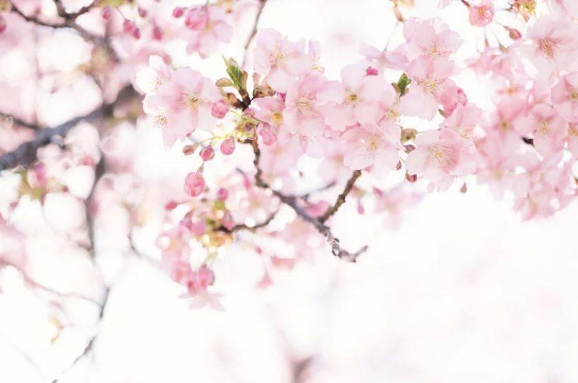 """铜梁""""开往春天的列车""""已起航,这些赏花宝地等您来打卡!"""