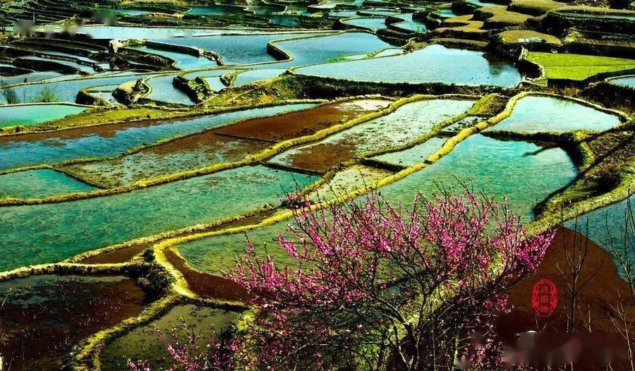 樱花动漫:元阳梯田,是真正的大地艺术,犹如一幅幅油画 网络快讯 第3张