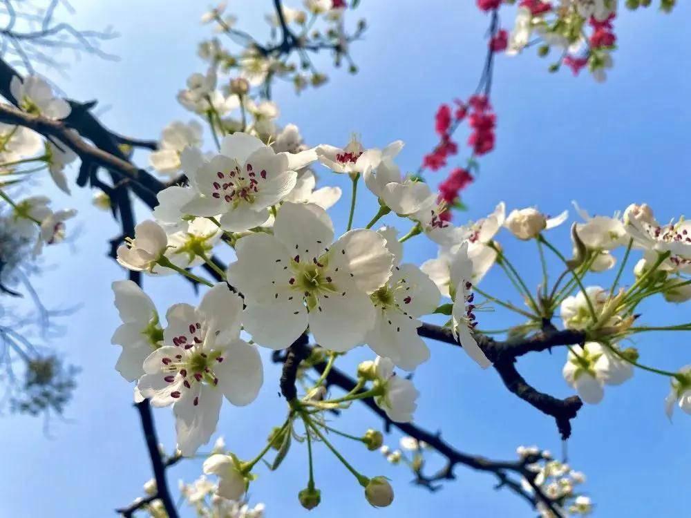 阳春三月,赏花正当时