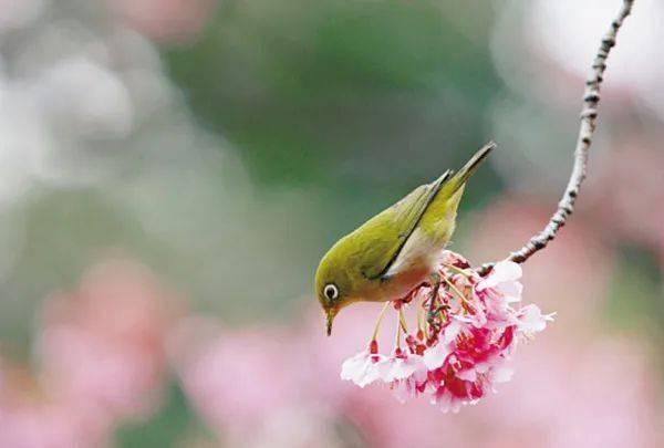wps下一页:三月桃花开,春天按时来 网络快讯 第12张
