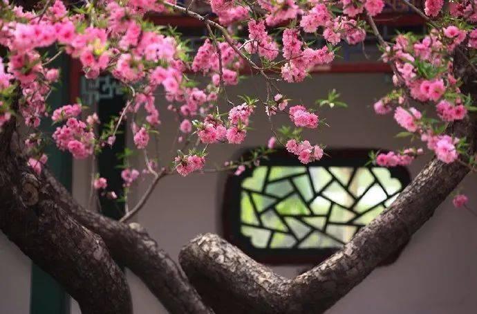 wps下一页:三月桃花开,春天按时来 网络快讯 第10张