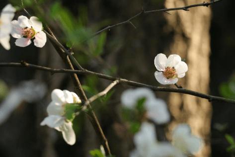 春季赏花攻略→