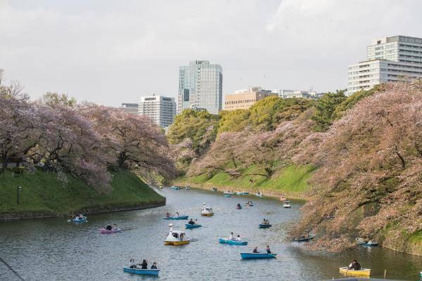 1200年来最早盛花期 日本京都樱花今年为何创纪录?