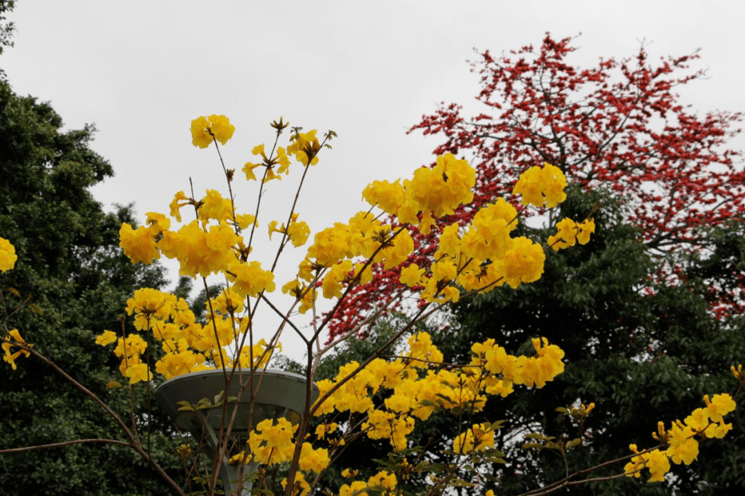 广州十一区一步一花景丨赏春花读历史,品味羊城之美